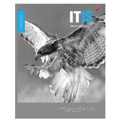 Зошит А4/96 кл скоба YES виб гібридний лак Amazing Bird